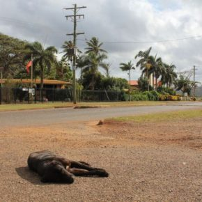 Calls for decade-long cashless welfare card trial on Cape York Peninsula to continue